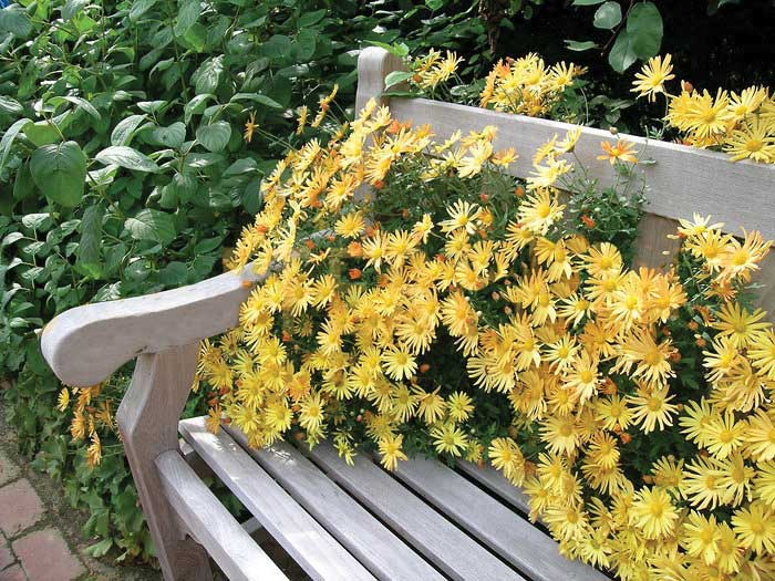 Park-Bench-Flowers